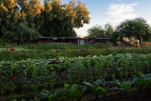 Soil & Seed Garden Market - The Farm at South Mountain